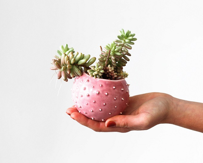 Ceramic Spiky Planter - Olis Cupboard