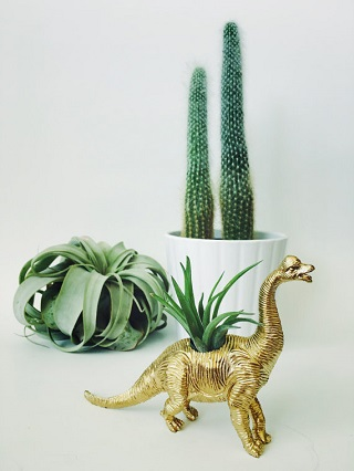 Dino Planter / Two Trees Botanicals
